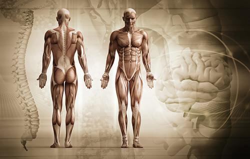 ¿Estamos dotados de memoria muscular?