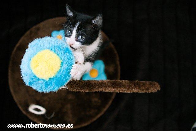 Lola y su juguete