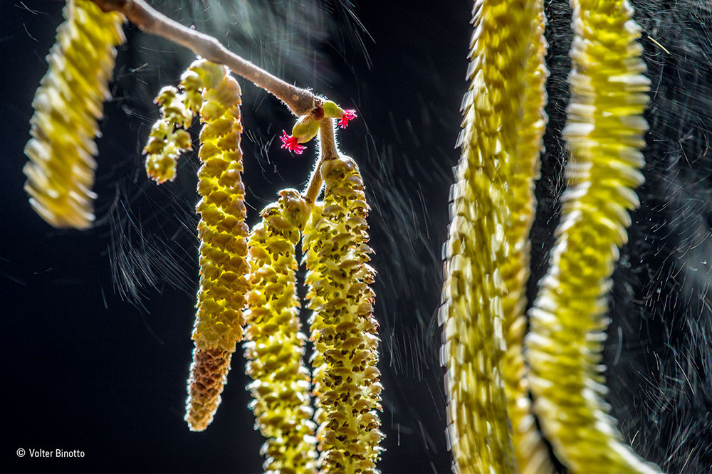 Valter Binotto Wildlife Photographer Of The Year Plants