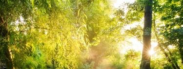 Celebra San Valentín en Giverny, el jardín más romántico de Francia