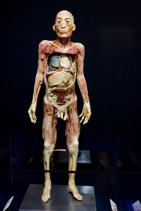 Human bodies, de Musealia