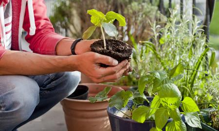 Cómo montar tu propio huerto urbano: qué merece la pena plantar y qué suministros necesitas para cultivar verduras en casa
