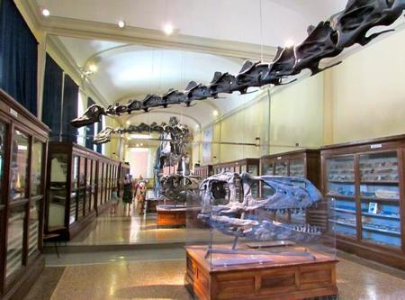 Museo Geologia Bolonia