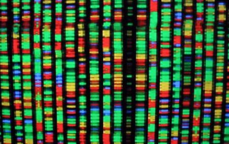 #TBT Un día como hoy en 2003 se completó el mapa del genoma humano