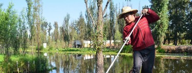 Las chinampas son el modelo de la agricultura sostenible para el futuro y te explicamos el porqué