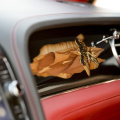 Foto 5 de 36 de la galería bentley-bentayga-falconry en Motorpasión