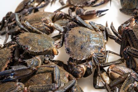 Aprovechando la nécora, un crustáceo de temporada, más allá de Navidad: qué es, cómo cocinarla y tres recetas para disfrutar