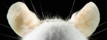 'Thank you, Mouse!', un homenaje en forma de fotolibro para dar las gracias por fin a los valiosos ratones de laboratorio