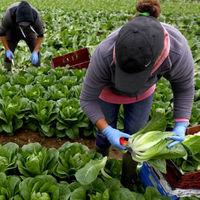 La pandemia de COVID-19 empeoraría la desigualdad por impacto desproporcionado en los trabajadores poco calificados