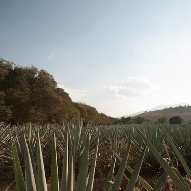 Jalisco será sede de la Reunión Nacional sobre la Cocina Tradicional Mexicana como Patrimonio de la Humanidad