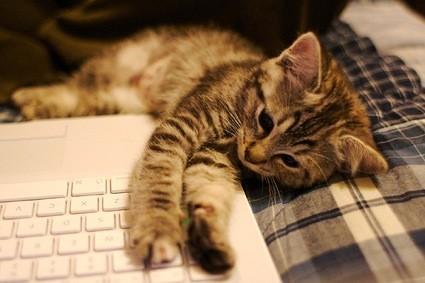 La imagen de la semana: Gato con macbook