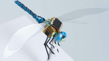 El primer dron biológico: DragonFly