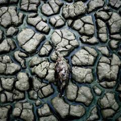 Foto 2 de 16 de la galería reuters-2007 en Xataka Foto