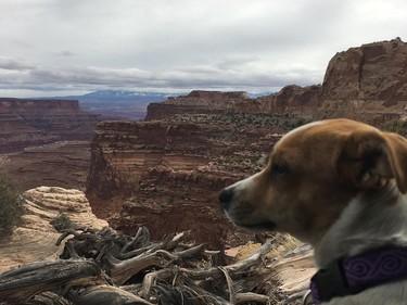 Si te gustan los animales y viajar es tu pasión, estás de suerte: podrás recorrer el mundo (casi) gratis cuidando mascotas ajenas