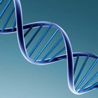 Si se modifica un gen, ya hay software que nos dice qué ocurrirá