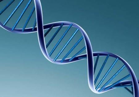 si se modifica un gen ya hay software que nos dice qué ocurrirá