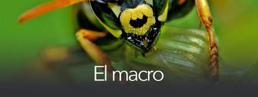 Todo sobre fotografía móvil (3): el macro