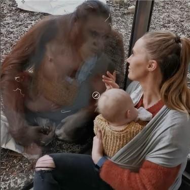 El vídeo viral de una orangutana que acababa de perder a su cría, acercándose con ternura a una turista que amamantaba a su bebé