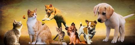¿Los perros son más inteligentes que los gatos?