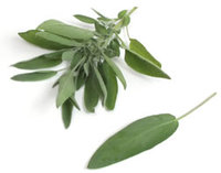 La Salvia, su uso en la cocina