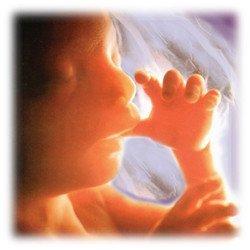 Los fetos ¿pueden o no sentir dolor?
