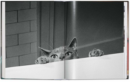 Otra forma de ver fotografía en Instagram, los gatos de Walter Chandoha y más: Galaxia Xataka Foto