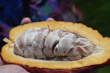 Por qué se celebra Día mundial del cacao: beneficios para la salud y porque es tan importante para los mexicanos.