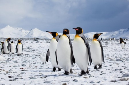 Seis distribuciones de Linux enfocadas a empresas