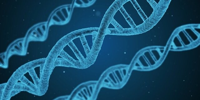 El 57% de la influencia genética total en el logro educativo y laboral no tiene que ver con las habilidades cognitivas