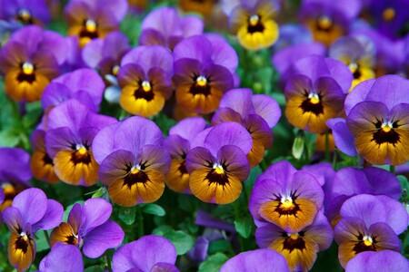 Pon a punto tu terraza o balcón con estas 7 plantas para dar color al otoño