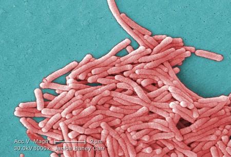 Legionella Pneumophila Sem