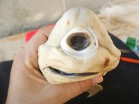 El extraño caso del tiburón cíclope