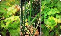 Cómo conservar las hierbas aromáticas
