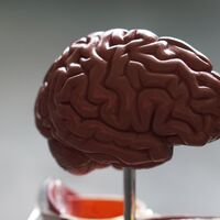 Acaba de publicarse el mayor análisis jamás hecho sobre la neurobiología del placebo y, por fin, empezamos a entender cómo juega con nuestros cerebros