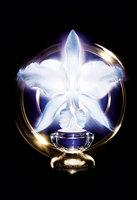 Gold Orchid, la tercera generación de cosmética Premium Guerlain: la fertilidad celular