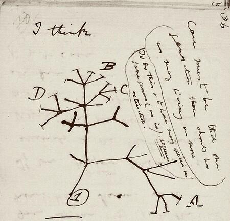 El icónico boceto del árbol de la vida de Charles Darwin y se pide ayuda para localizarlo