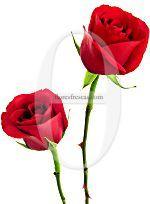 Enviar doce rosas rojas