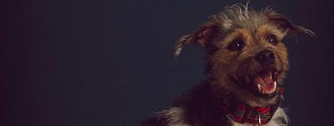 Explorando estilos fotográficos: La fotografía de mascotas como medio para crear sistemas fotográficos
