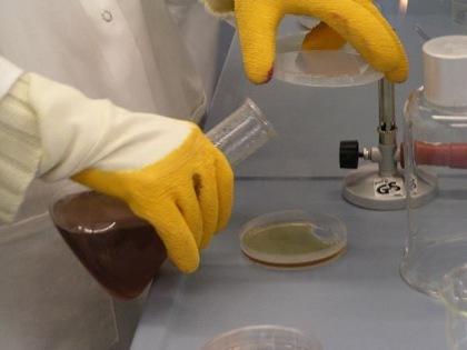 Agar en microbiología