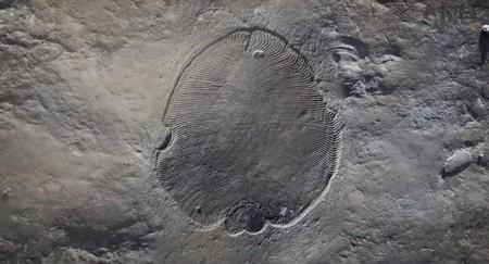 Se confirma que este fósil es del primer animal confirmado en el registro geológico