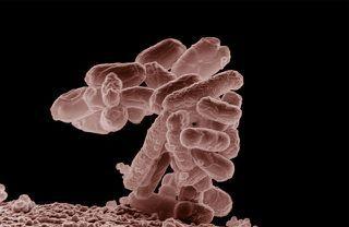 Bacterias intestinales contra el cáncer