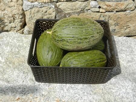 Beneficios del chilacayote: una verdura 100% mexicana que puede ayudar a tu salud y a bajar tus niveles de azúcar
