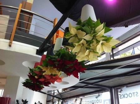 Macetas transparentes y macetas colgantes, sé original con tus plantas en otoño e invierno