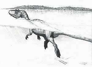 Algunos dinosaurios podían nadar