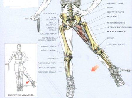 Alto que puedo tomar para eliminar grasa abdominal flechas indican