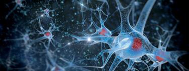Qué es el neurosexismo y por qué puede estar retrasando la igualdad de género (incluso en la ciencia)