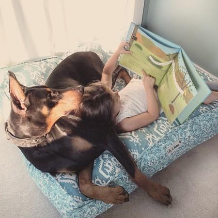 Cutie And The Beast Dog Girl Seana Doberman 95