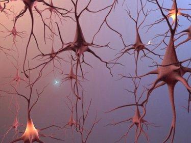 Se fabrican las primeras neuronas artificiales del mundo