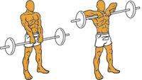 Guía para principiantes (XIX): Remo al cuello