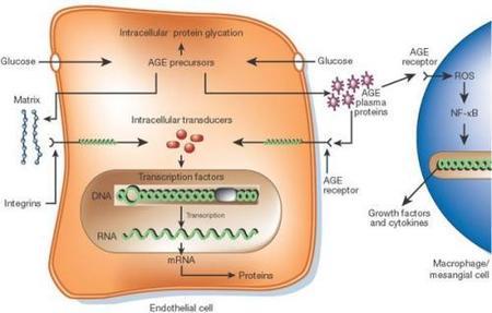 Cosméticos antiedad A.G.E. contra la glicación